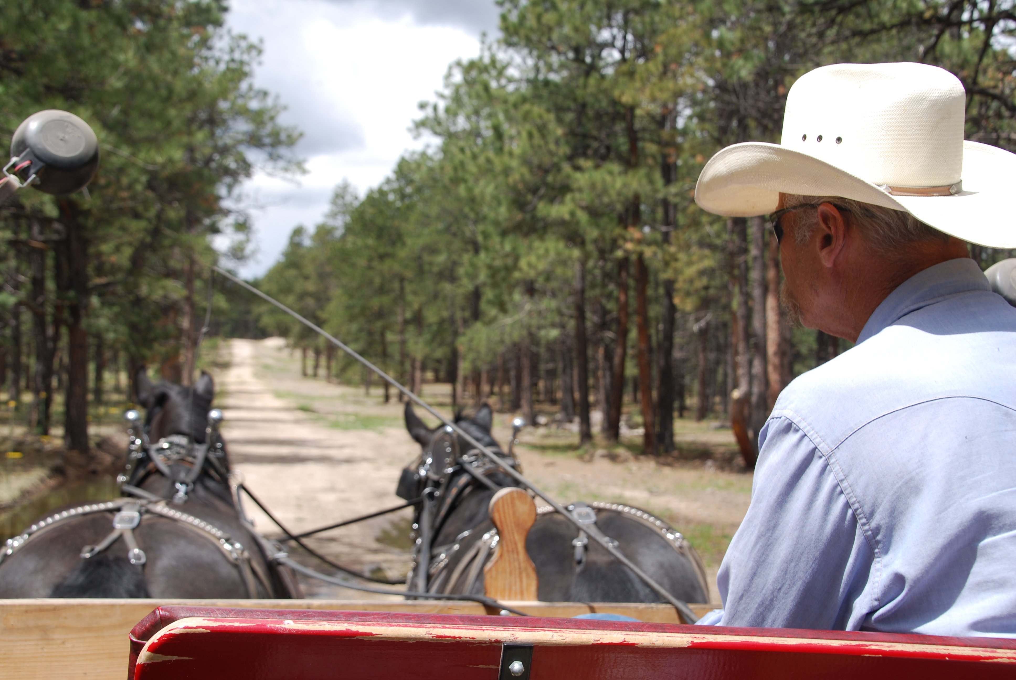 Bob Olson, Olson Carriage & Harness, Black Forest, CO