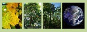 LeavesTreesForestWorld